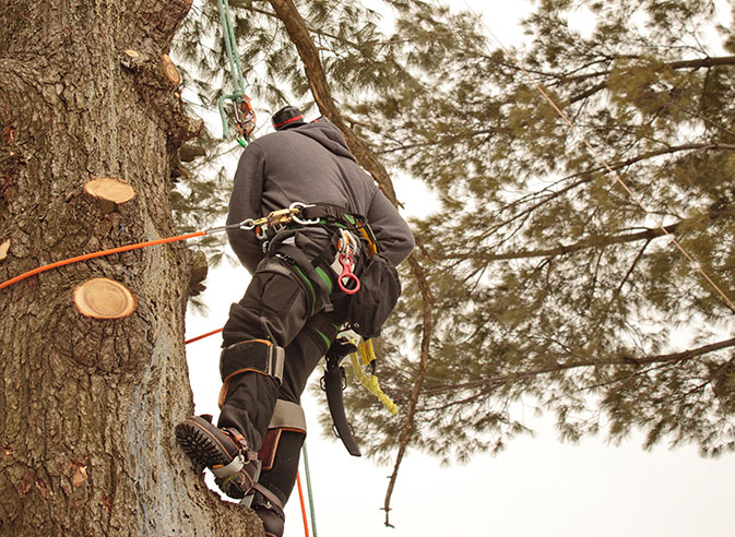 Inexpensive Tree Services employee trimming a tree