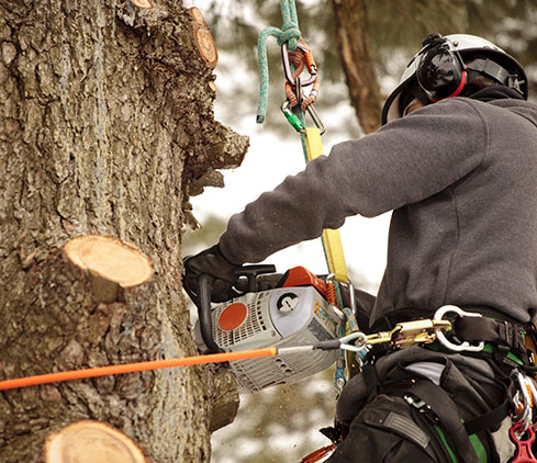 Inexpensive Tree Services employee cutting a tree down