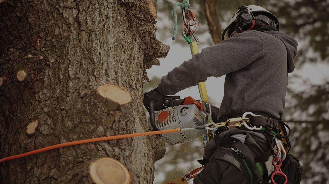 Inexpensive Tree Services: Stump and tree removal in San Gabriel Valley, Pacific Palisades and Long Beach