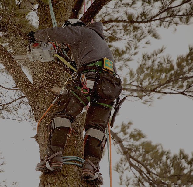 Inexpensive Tree Services: Tree health in San Gabriel Valley, Pacific Palisades and Long Beach