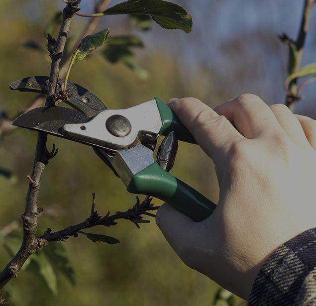 Inexpensive Tree Services: Tree pruning in San Gabriel Valley, Pacific Palisades and Long Beach